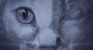 Daniel Dubb & Jonathan Rosa – Shades Of You Feat. Kyla Millette (Suara)